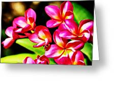 Pink And Red Plumeria Greeting Card