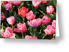 Pink And Red Ruffly Tulips Square Greeting Card