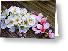 Pink And White 2 Greeting Card