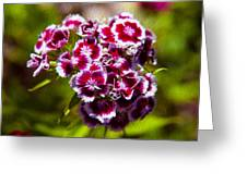 Pink And White Carnations Greeting Card