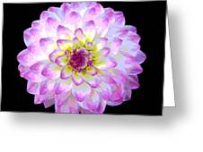 Pink And White Dahlia Posterized On Black Greeting Card