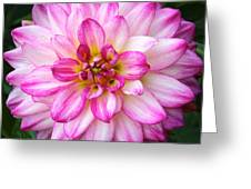 Pink And White Dahlia Square Greeting Card
