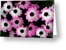 Pink And White Daisies Greeting Card