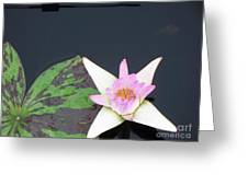Pink And White Lily Greeting Card