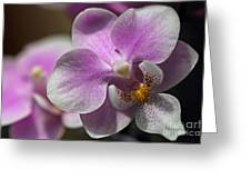 Pink And White Orchid Greeting Card