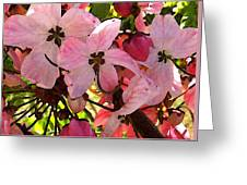Pink And White Shower Tree Greeting Card