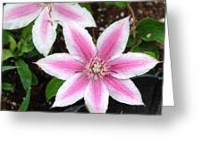Pink And White Wildflowers Greeting Card