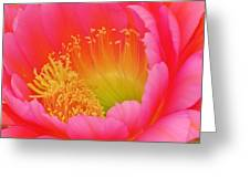 Pink And Yellow Cactus Flower Greeting Card