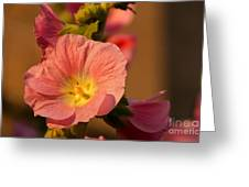 Pink And Yellow Hollyhock Greeting Card