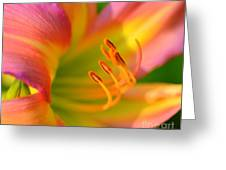 Pink And Yellow Greeting Card