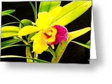 Pink And Yellow Orchid Flower  Greeting Card