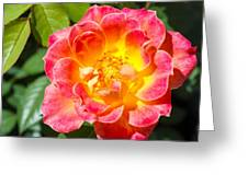 Pink And Yellow Rose Greeting Card