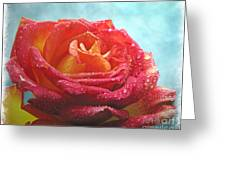 Pink And Yellow Rose With Dew II  Greeting Card