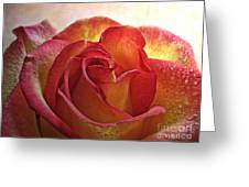 Pink And Yellow Rose With Water Drops Greeting Card