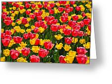 Pink And Yellow Tulips Greeting Card