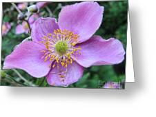 Pink Anemone Flower Greeting Card