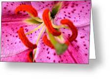 Pink Aroma  Greeting Card