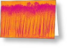 Pink Aspen Trees Greeting Card