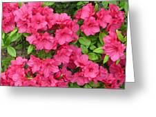 Pink Aura Greeting Card