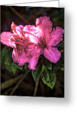 Pink Azalea 3 Greeting Card