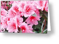 Pink Azalea In Bloom Greeting Card by Halyna  Yarova