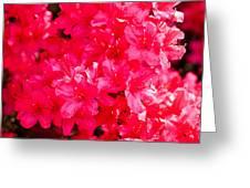 Pink Azalea's Greeting Card
