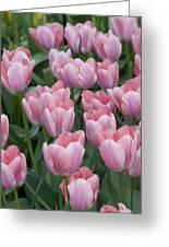 Pink Beauties Greeting Card