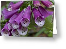 Pink Bells Greeting Card
