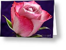 Pink Bliss Greeting Card