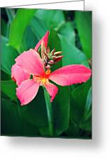 Pink Bloom Greeting Card by Cathie Tyler