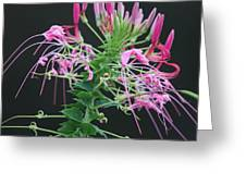 Pink Bloom Squared Greeting Card
