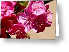 Bee Flying Pink Blossoms 031015a Greeting Card
