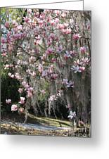 Pink Blossoms And Gray Moss Greeting Card
