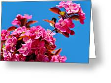 Pink Blossoms Blue Sky 031015a Greeting Card