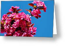 Pink Blossoms Blue Sky 031015aa Greeting Card