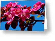 Pink Blossoms Closeup 031015a Greeting Card