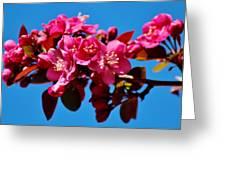 Pink Blossoms Closeup 031015ab Greeting Card