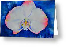 Pink Blush Orchid Greeting Card