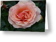Pink Blush Rose I Greeting Card