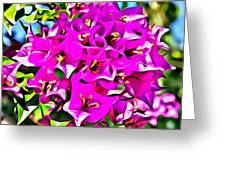 Pink Bouganvilla Greeting Card