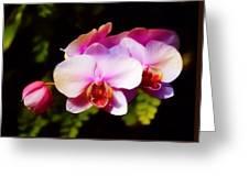 Pink Brilliance Greeting Card