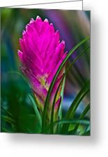 Pink Bromelaid Flower Greeting Card