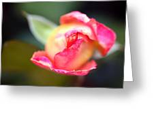 Pink Bud Greeting Card