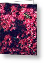 Pink Bumblebee Greeting Card