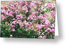 Pink Bush Greeting Card
