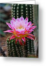 Pink Cactus Flower Greeting Card