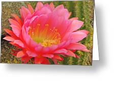 Pink Cactus Flower Of The Southwest Greeting Card