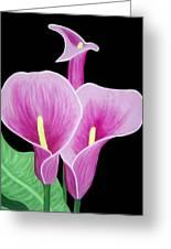 Pink Calla Lilies 1 Greeting Card