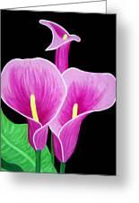 Pink Calla Lillies 2 Greeting Card