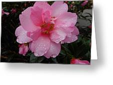 Pink Camelia With Droplets Greeting Card
